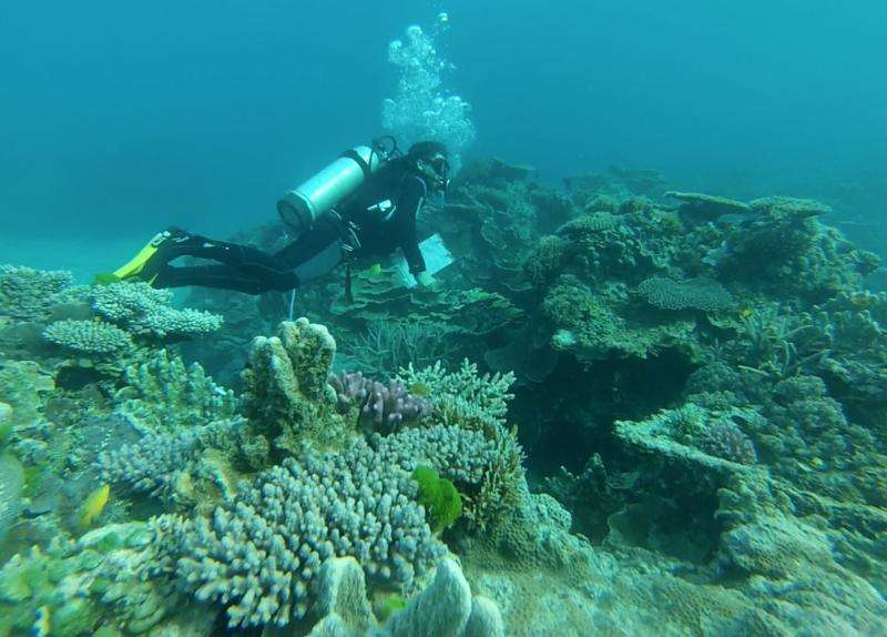 Changes to Australia's marine reserves leave our oceans unprotected