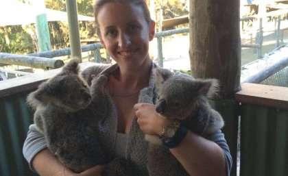 Chilling findings are good news for koalas