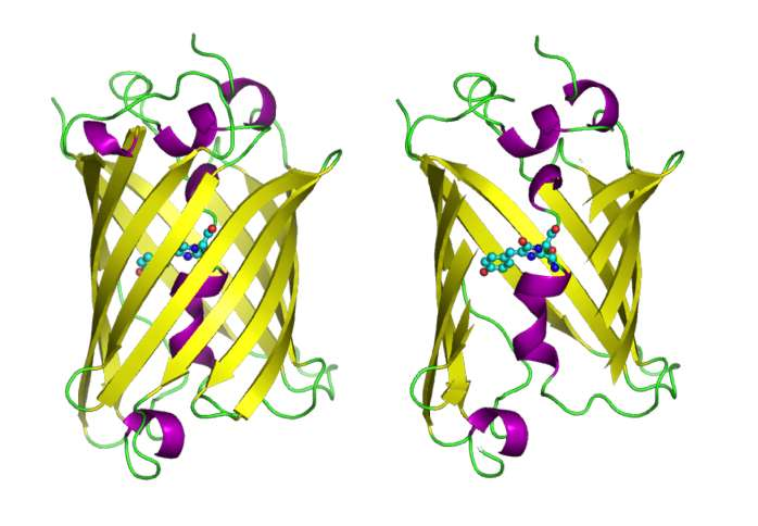 Combined approach used to investigate photophysics of green fluorescent protein