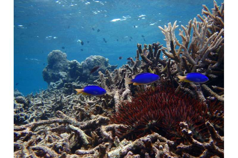 Coral death stops fish from learning predators