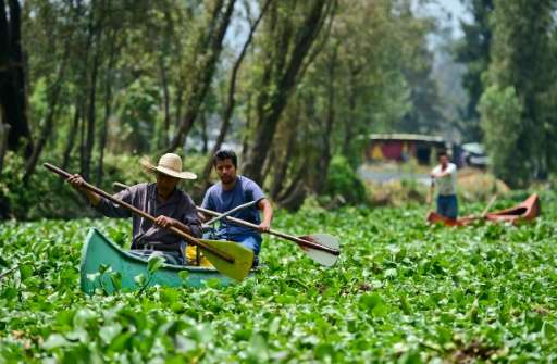 Criss-crossed with natural canals and artificial islands, Xochimilco is the last reminder of how the Aztecs lived 500 years ago
