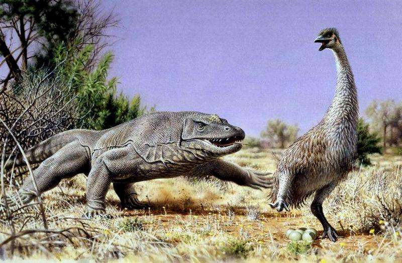 CU-Boulder study: Ancient extinction of giant Australian bird points to humans