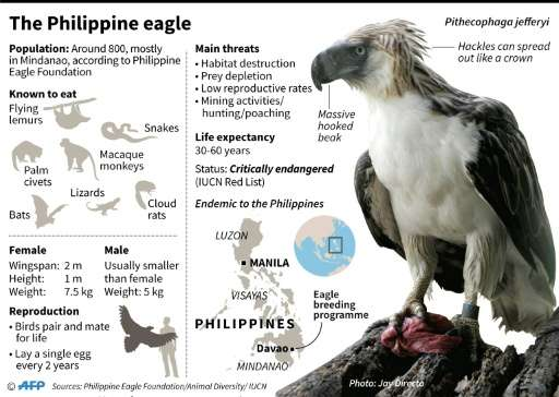 Factfile on the endangered Philippine eagle