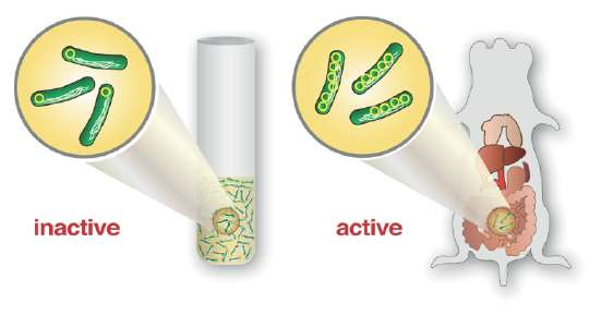 Gene amplification – the fast track to infection