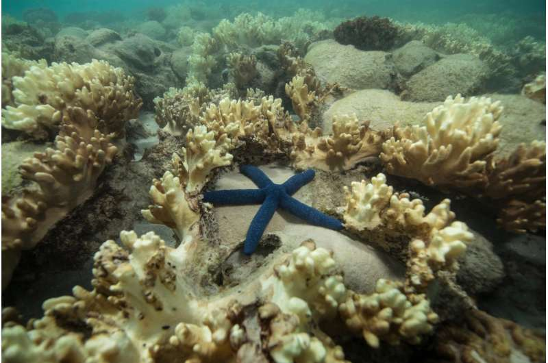 Good bacteria vital to coral reef survival