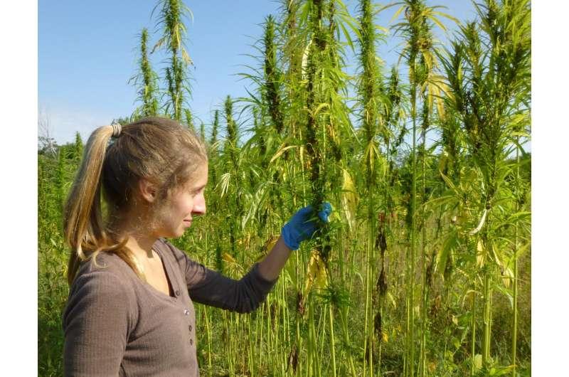 Growing industrial hemp in eastern Canada: A new frontier
