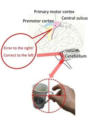 How the brain improves motor control