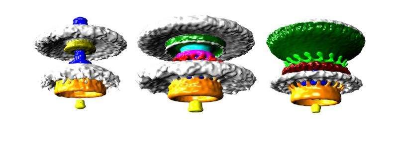 Incredible images reveal bacteria motor parts in unprecedented detail