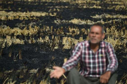 Indian farmer Ishwar Singh speaks with AFP near one of his burned-out fields, in Karnal, some 140 km north of New Delhi