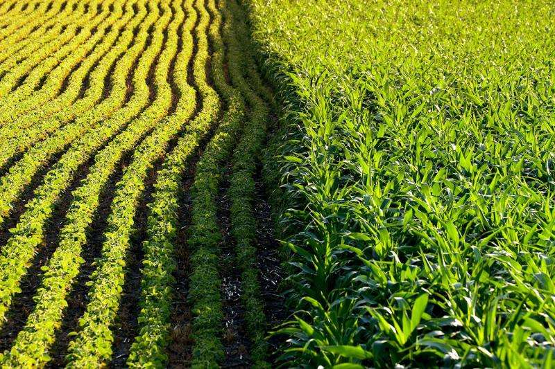 Largest-ever study reveals environmental impact of genetically modified crops