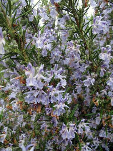 Many drought-resistant plants also draw pollinators