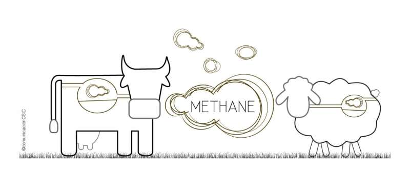 Methane production reduced in ruminants