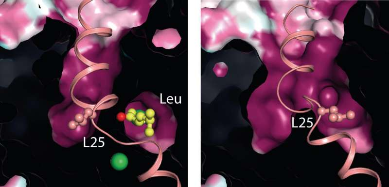 New discovery from the molecular machinery for depression and addiction