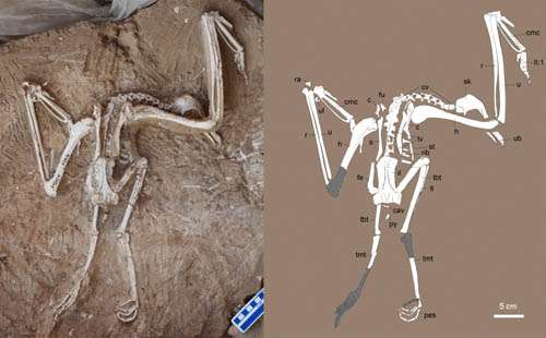 New old world vulture found from the Late Miocene of China