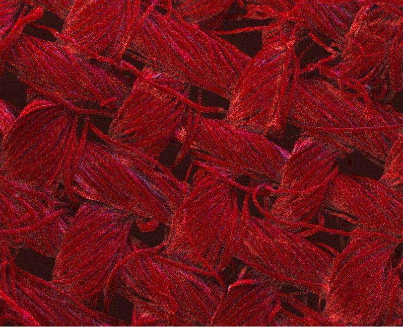 No more washing: Nano-enhanced textiles clean themselves with light