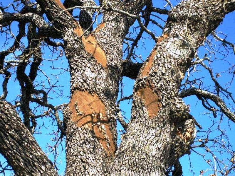 Oak wilt, other tree diseases examined at program in San Antonio
