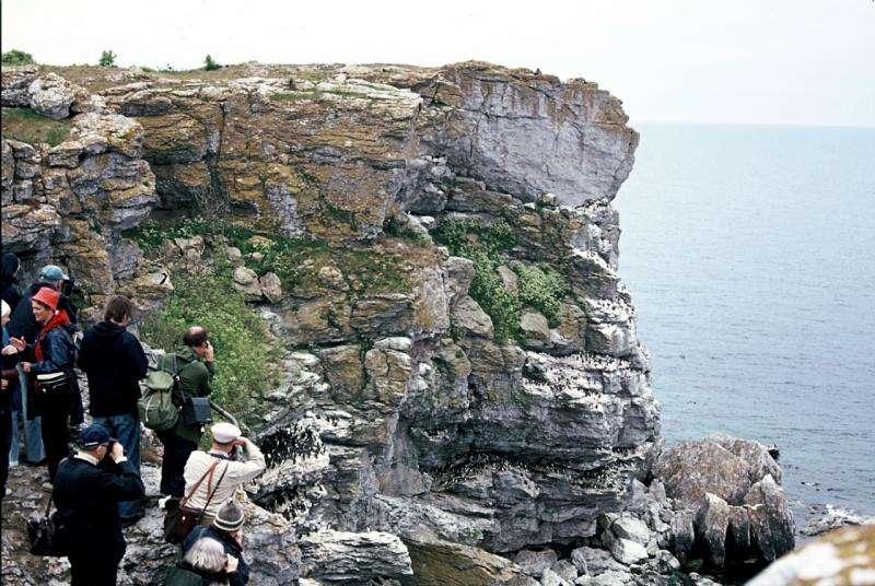 Old tourist photos show seabird's rise over the last century