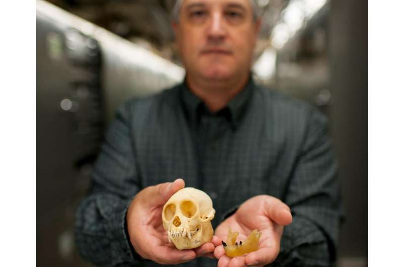 Paleontologists find first fossil monkey in North America -- but how did it get here?