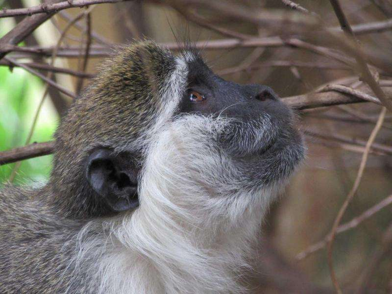 Past climate linked to mammal communities in Africa today