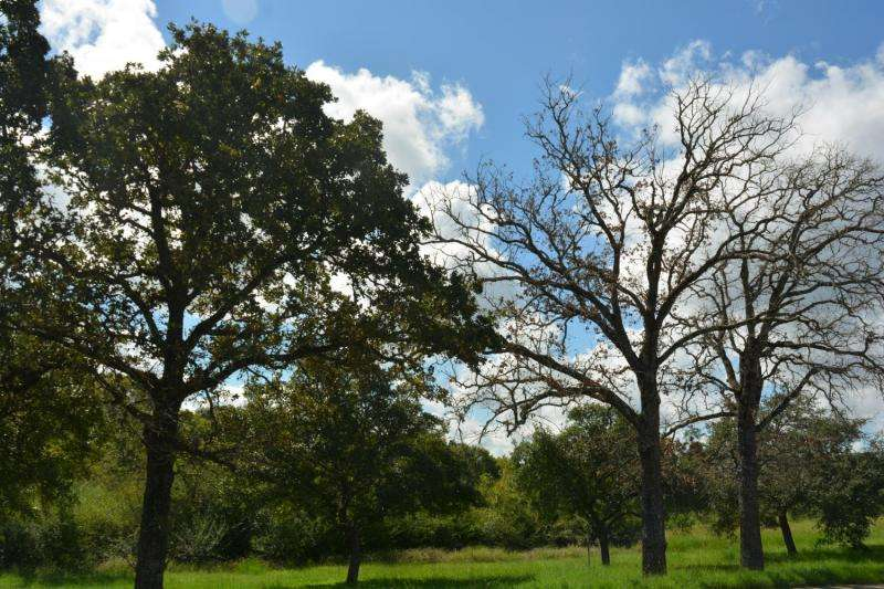 Pathogens, insects in line to cause widespread post oak decline