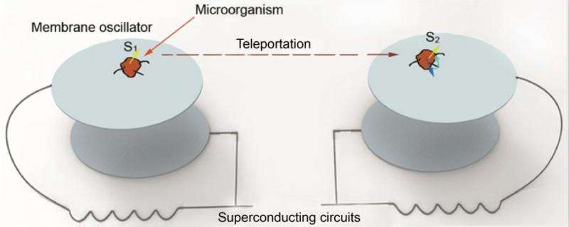 Physicists propose the first scheme to teleport the memory of an organism