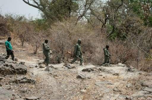 Researcher Martial Kiki (left) walks through the bush with rangers during a lion population estimate at Nigeria's Yankari Game R