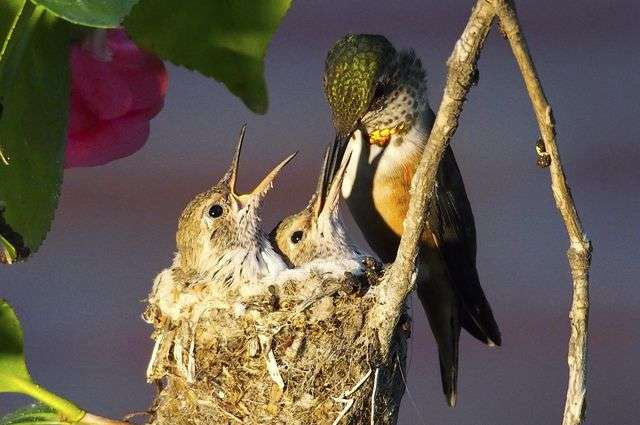 Researcher's 200-plus wild 'fairy' birds make their home at UCLA