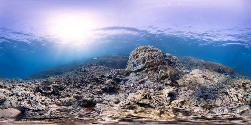 Rising CO2 threatens coral and people who use reefs