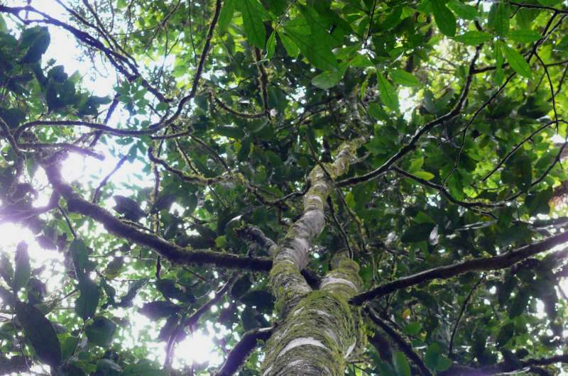Schoolkids name a new tree species from Tanzania while fundraising for tropical forests