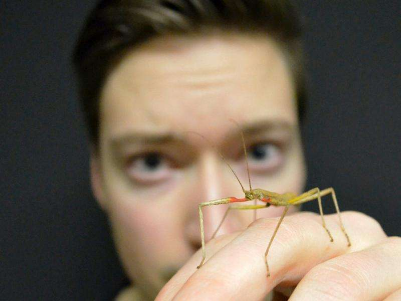 Stick insect's propulsion joint discovered