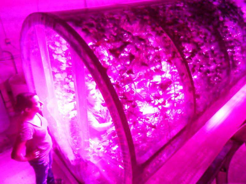 Study finds LED lights provide improved energy efficiency and production for growing food crops in space