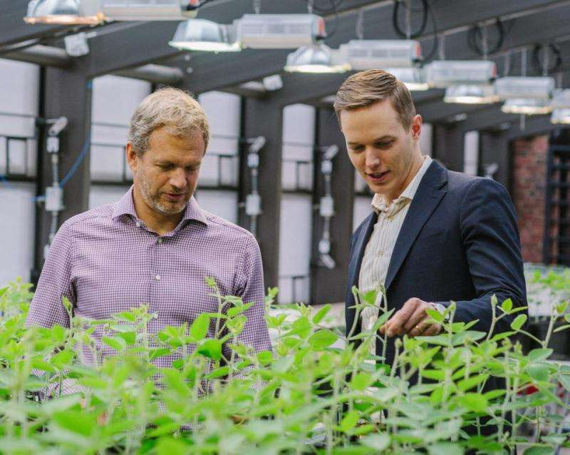 Super seeds promise better crops