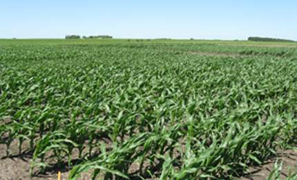 The economy of cold soil blues: Starter fertilizer for corn not necessarily a boost