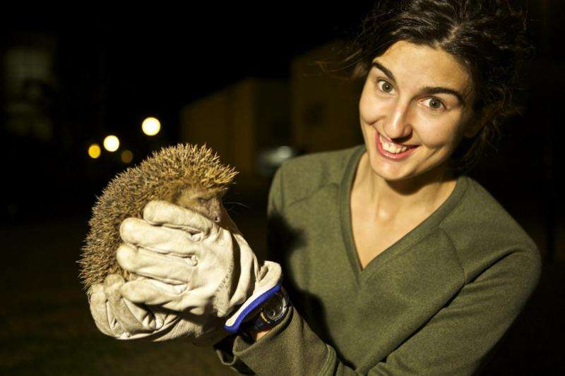 Too hot to hibernate for these Spanish hedgehogs