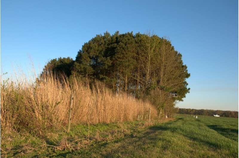 Trading farmland for nitrogen protection