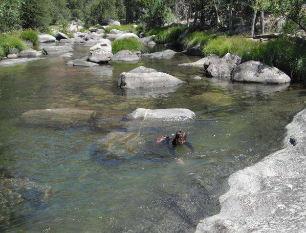 Western pond turtles found to be exposed to pesticides in Sequoia National Park