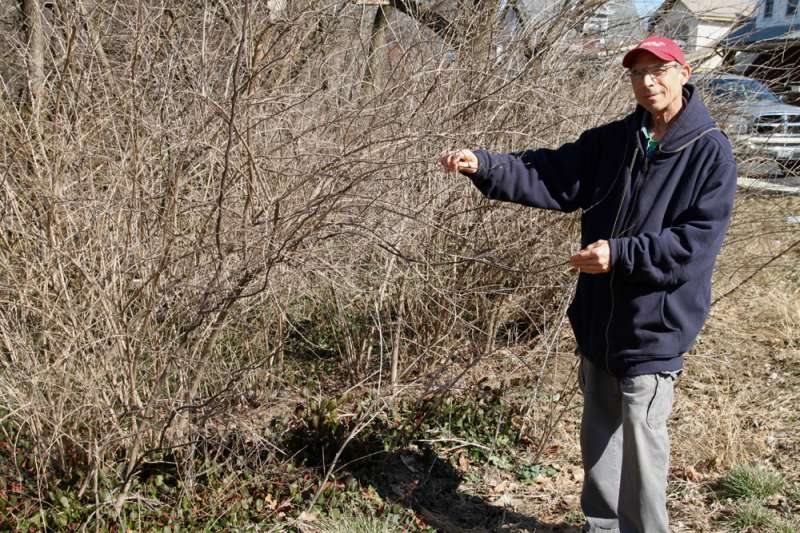 When beauty becomes the beast: UC research efforts successfully combat invasive species