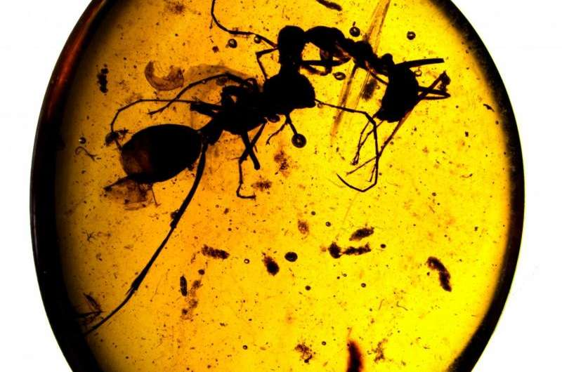 100-mllion-year-old amber preserves oldest animal societies