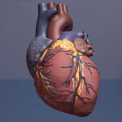 Genetically-modified probiotic may one day treat pulmonary hypertension