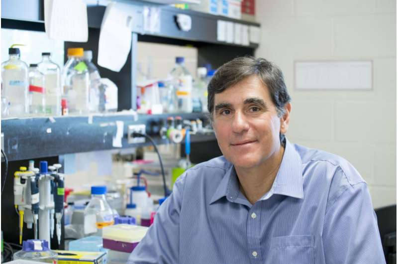 Understanding how chemical changes in the brain affect Alzheimer's disease