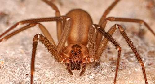 Exploring the evolution of spider venom to improve human health
