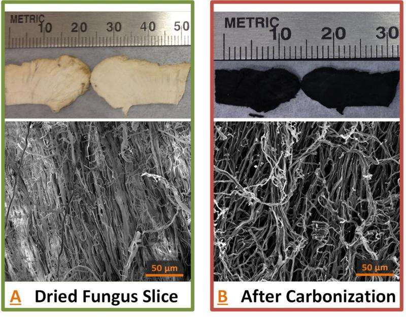Researchers cook up new battery anodes with wild mushrooms