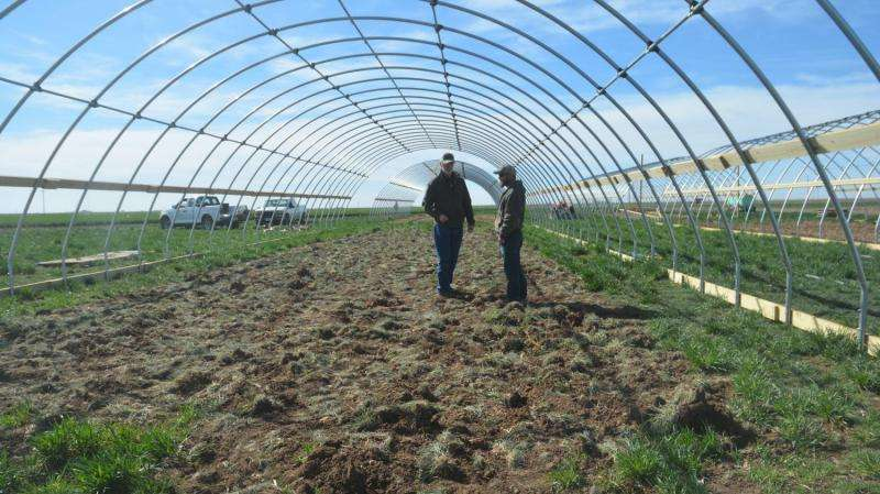 Researcher studies high-value vegetable crop production under high tunnels