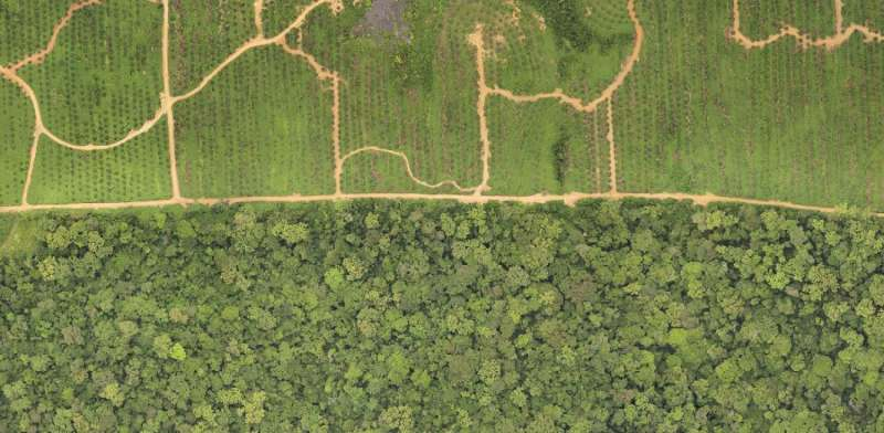 Conservation key to curbing emissions from palm oil agriculture in Africa