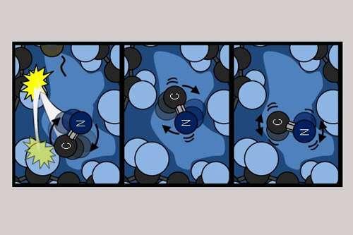 Research reveals unprecedented observations of how a hot molecule cools in a liquid