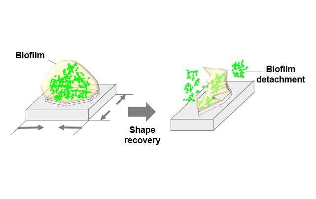 Researchers discover way to make surfaces less vulnerable to disease-causing bacteria