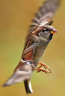 Exploring the secret life of house sparrows with the aid of a 3-D printer