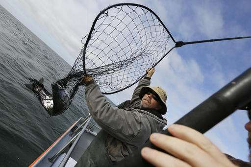 California's native salmon struggling in fifth year of drought
