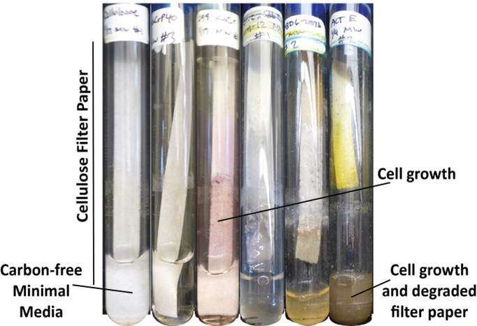 Chemistry lessons from bacteria may improve biofuel production
