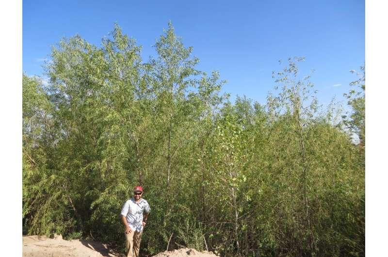 Colorado River Delta flows help birds, plants, groundwater